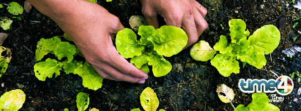 #Time4 Dicas: benefícios dos orgânicos